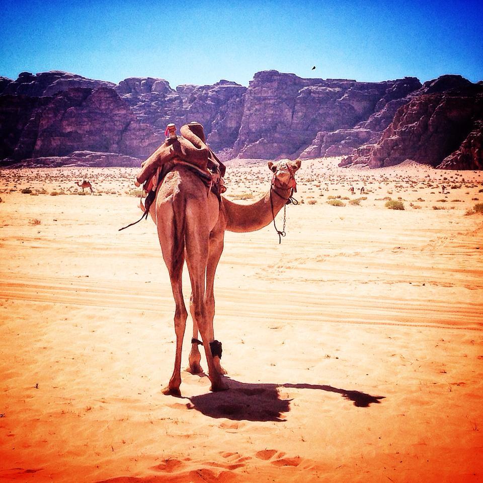 Petra Desert Marathon 2013