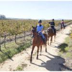 WINE FARM HORSE RIDE