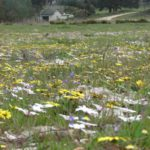 Quad biking and picnic in flowers  (15)