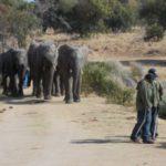 ADVENTURE WITH ELEPHANTS