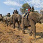 safari-2-12-00-011
