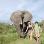 elephant-adventure