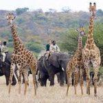 elephant-safari
